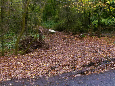 LAND FOR SALE: half an acre of woodland nr. Ashford, Kent