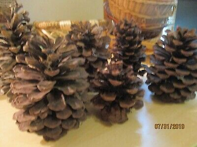 Pine Cones 7 Of Them For You  Crafters Maybe Could Use These