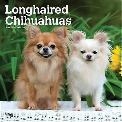 LONGHAIRED CHIHUAHUA large calendar 2020
