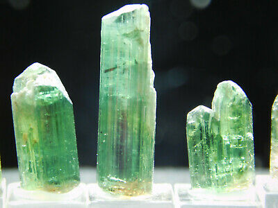 A Big Lot of SIX! Small Green Tourmaline Crystals on a Stand! Brazil 21.2