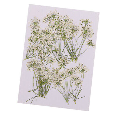 10pcs Pressed Natural Dried Flowers Lace Flower for DIY Craft Scrapbooking