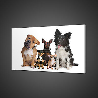 Groups Of Dogs Beautiful Animals Canvas Print Wall Art Picture Photo