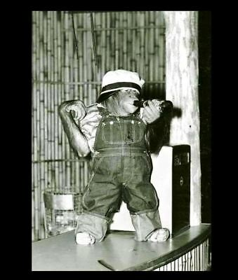 Vintage Funny Monkey Drinking Beer PHOTO Circus Chimpanzee, Costume Freak Creepy