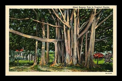 Dr Jim Stamps Us Giant Banyan Tree Tropical Florida Linen View Postcard
