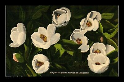 Dr Jim Stamps Us Magnolias State Flower Of Louisiana Linen View Postcard