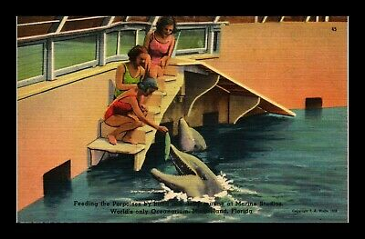 Dr Jim Stamps Us Girls Feeding Porpoises Marineland Florida Linen Postcard
