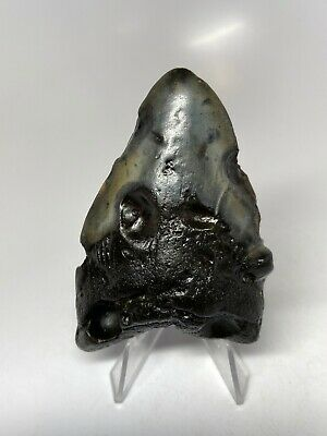 "Megalodon Shark Tooth 3.42"" Unique - Pathological Fossil - Real 5478"