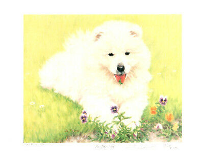 Samoyed Limited Edition Puppy Art Print by UK Artist Sue Driver LAST ONE!