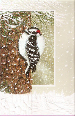 Winter Woodpecker by Shane Dimmick Embossed Christmas Cards Box of 16 Downy