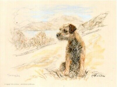 Border Terrier Limited Edition Print by UK Artist Gill Evans Coast Guard