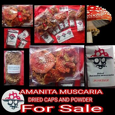 Dried caps of Amanita (M) 100.g -(Fly) AGARIC 🍄 UK SELLER fast delivery.