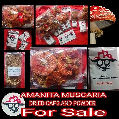 Dried powderd caps of Amanita (M) 100.g -(Fly) AGARIC 🍄 UK SELLER fast delivery