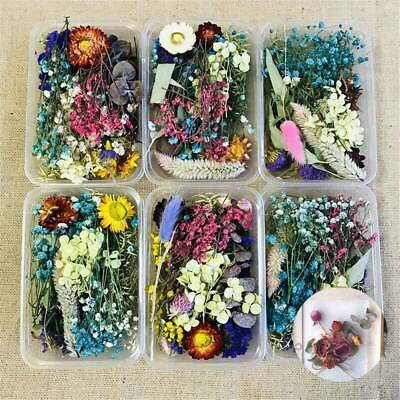 Assroetd Real Dried Flowers Pressed Leaves for DIY Epoxy Resin Jewelry Making.