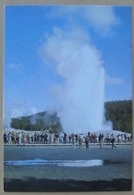 Close view of Old Faithful Geyser in Yellowstone National Park postcard
