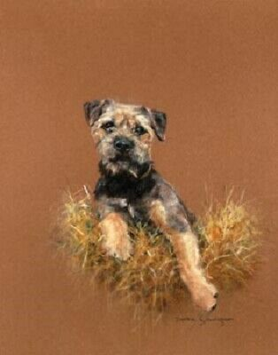 Border Terrier Limited Edition Art Print Straw Dog by UK Debbie Gillingham LAST!