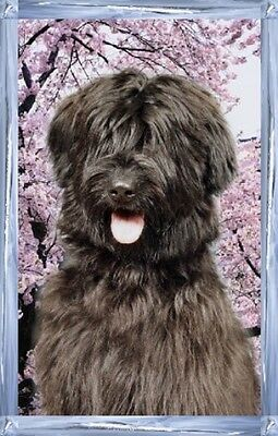 Briard A6 Dog Notelets No 2 By Starprint