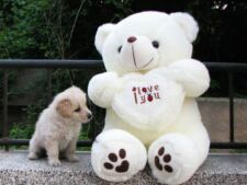 One I Love You LOVE HEART TEDDY BEAR SOFT COTTON TOY 50 CM WHITE