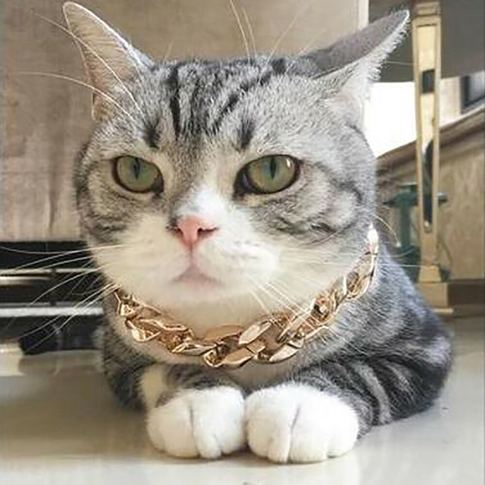 Eg_ Pet Puppy Dog Chain Collar Punk Gold Cat Wide Necklace Collar Adjustable Str 7